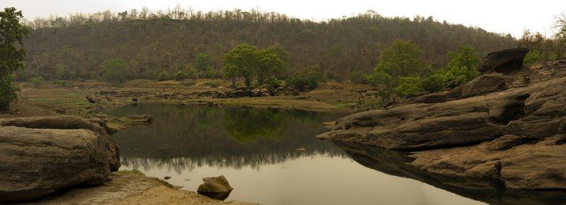 Gaur in Satpura Landscape
