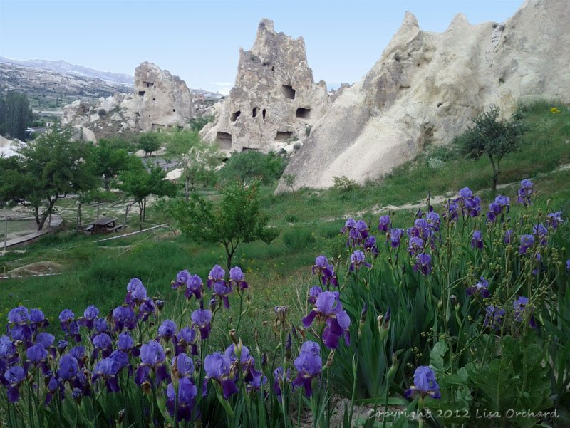 Beautiful spring flowers following us throughout this trip.  Göreme Open-Air Museum