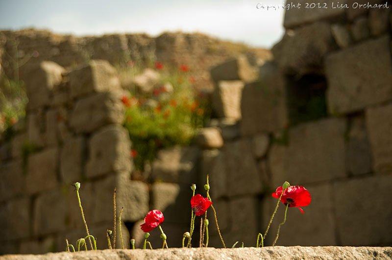 Ruins of the Pergamum