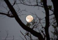Full moon over Kanha National Park