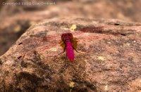 Fab dragonfly