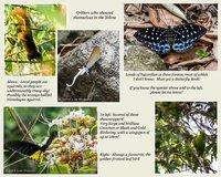 Critters in Cherrapjuni