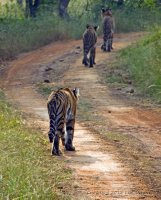 3 adolescent cubs taking a stroll