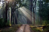 Kanha is the best for streaming sunlight!  The trees are so tall, creating amazing filters for the early morning rays.