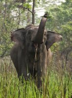A rather large Welcome to Manas from an Asian Elephant!