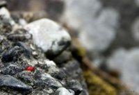 Colourful beetle at Mathanguri Lodge
