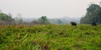 Beautiful Nameri with its imposing elephants