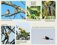 Kaziranga Birds