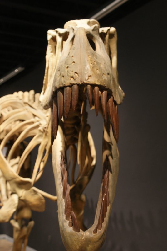 Torvosaurus roars to life