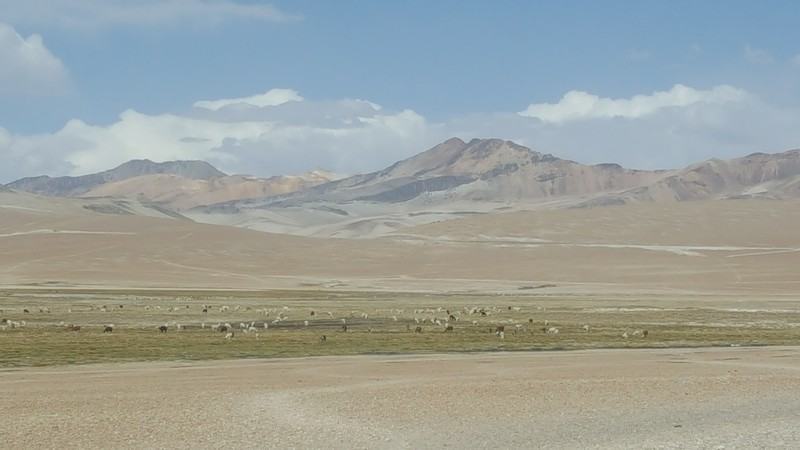 On the way through the desert we were able to see several herds of vicuña.
