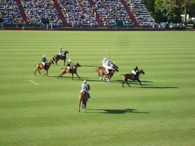 Polo!  It was really fun to watch and the horses were beautiful