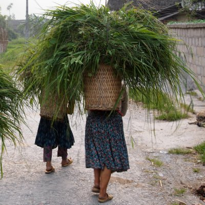 Hmong village life
