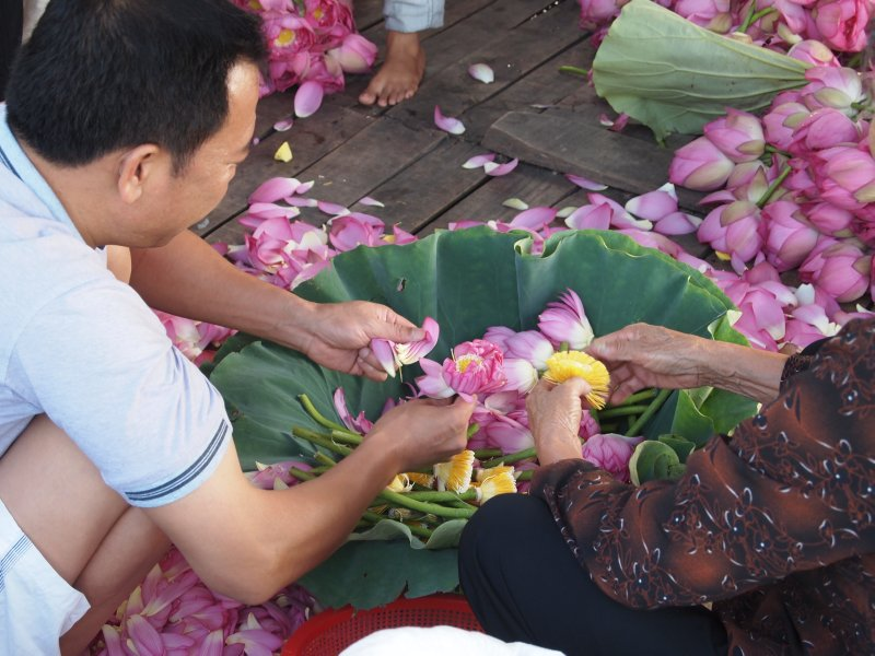 Petals are stripped from the freshly cut lotus and used to scent tea