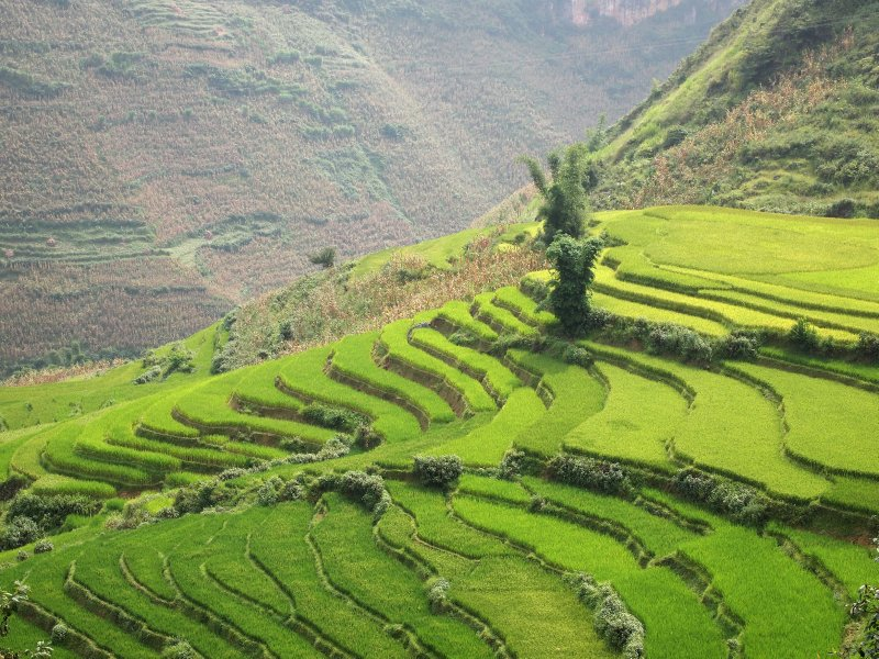 Glorious paddy fields in some of the most remote areas of northern Vietnam