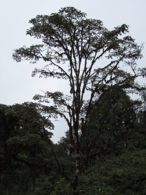 Ecuador_107.jpg