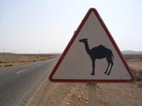 watch out for camels