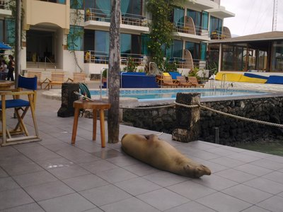 ... where many other sealions are ready to play at the Hotel Solymar.