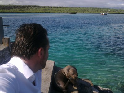 ... to be greeted by a friendly sealion at the ferry from the airport-island Baltra to the main island Santa Cruz...