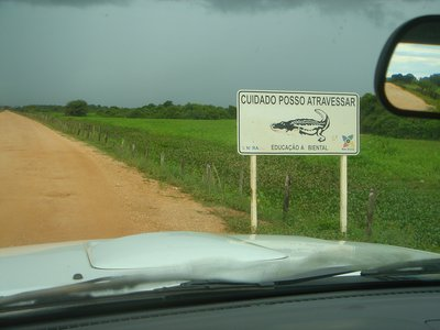Pantanal: Dangerous Road Traffic