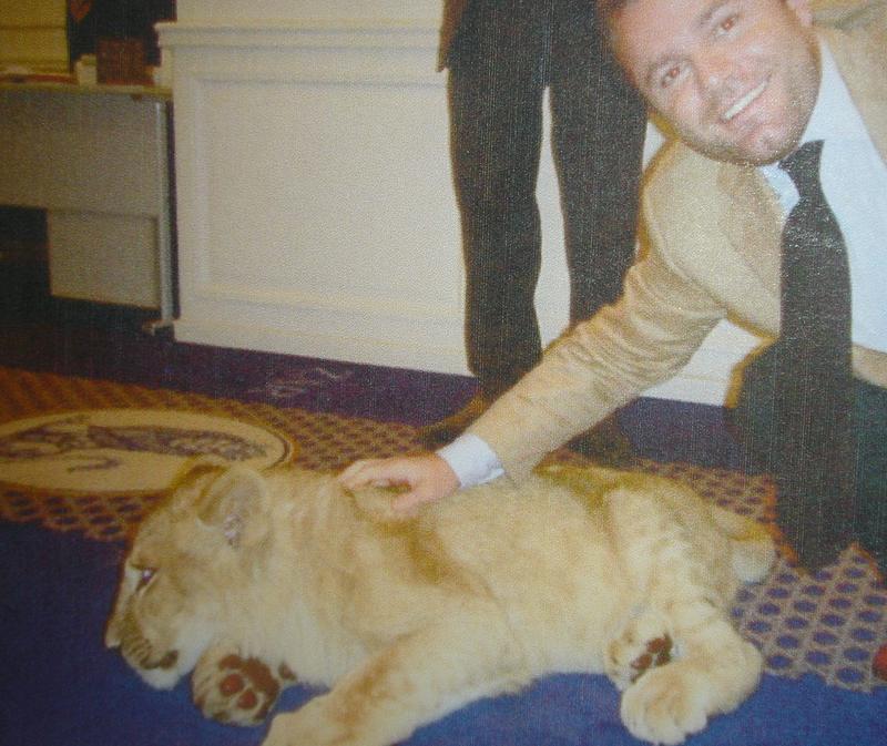 large_lion.png