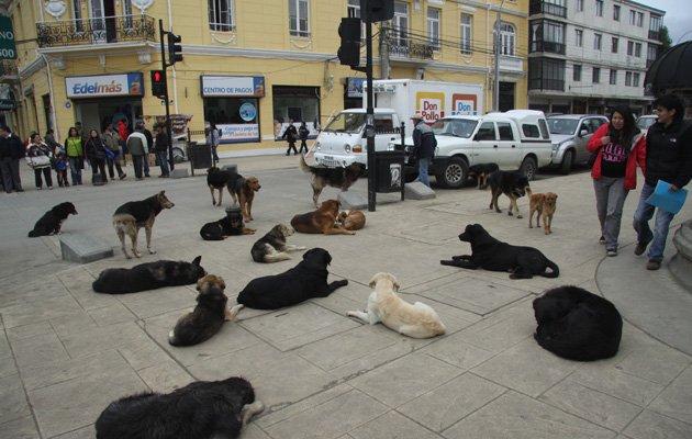 large_street_dogs.jpg