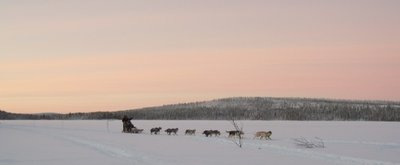 Dog Sledding Lapland