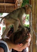 monkey on my head!