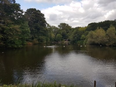 Hampstead Heath - Mixed Bathing Pond