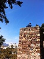Malaga_-_S..he_Alcazaba.jpg