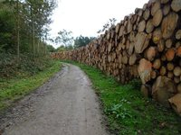 Piles of logs ready for sale.