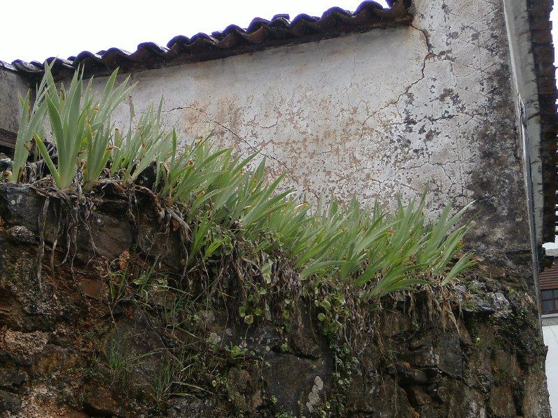 Oleiros garden