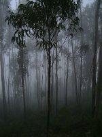 Misty_forest.jpg