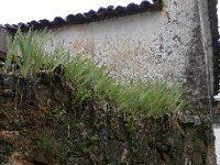 Oleiros_garden.jpg