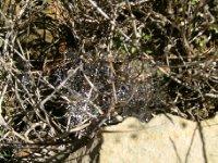 Spider web of gems