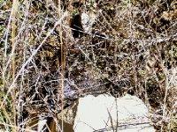 Spider web of gems2