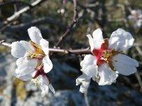 Spring_is_sprung_.jpg