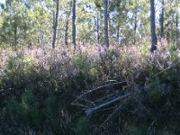 heather_in.._forest.jpg