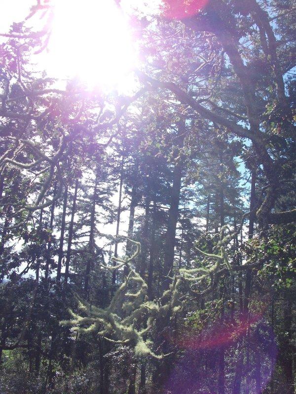 Moss and Sunshine