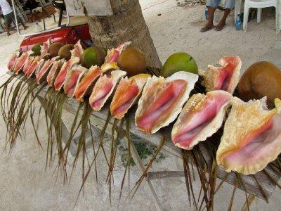 Caye Caulker, Belize - Conch shells for sale