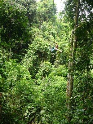 Jungle April 2011 031 (Small)