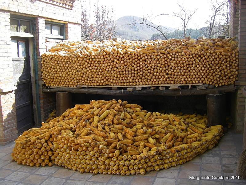 Corn Stored