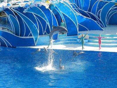 34_-_dolphin_leap.jpg