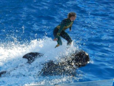 34_-_whale_ride.jpg
