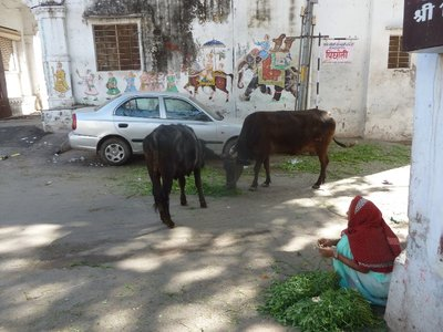Evan paid the lady 10 rupees ($.20) to feed the cows