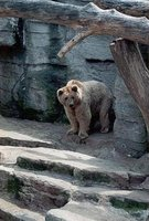 Vienna Tiergarten Bear