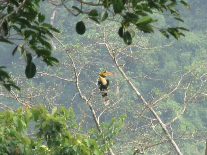 Khao Yai National Park - Thailand (3)