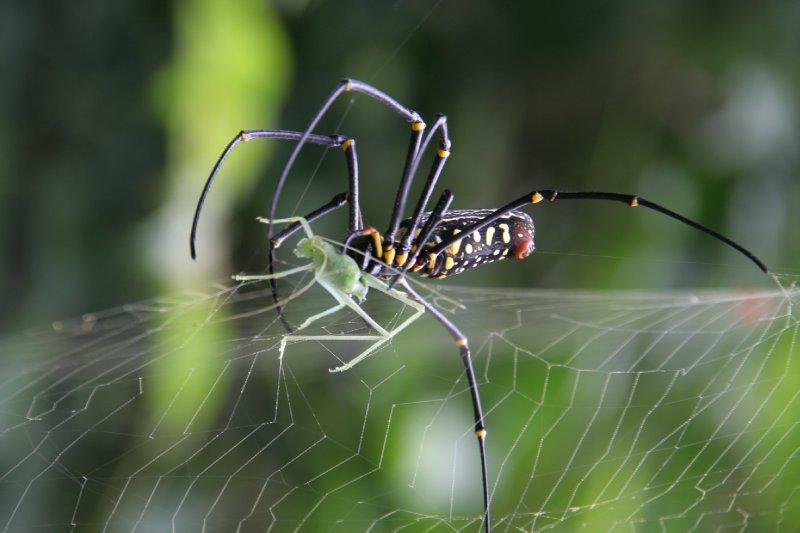 Khao Yai National Park - Thailand (20)