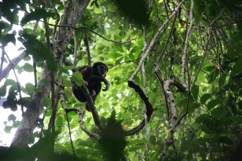 Khao Yai National Park - Thailand (28)