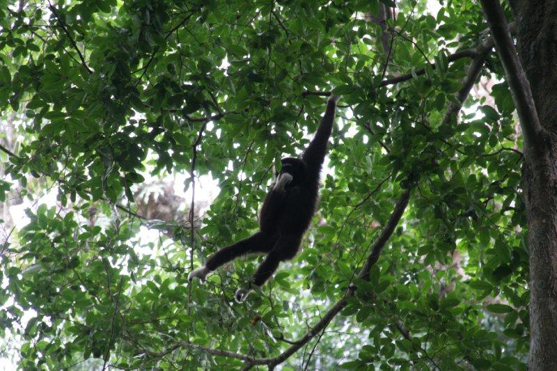 Khao Yai National Park - Thailand (29)