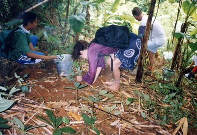 Planting trees in a village near Chiang Mai Thailand
